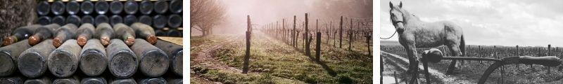 Vins Rares La Pangee