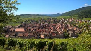 vins naturels d'Alsace