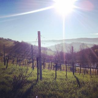 Les vins naturels italiens