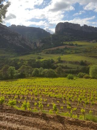 vins naturels du Rhône