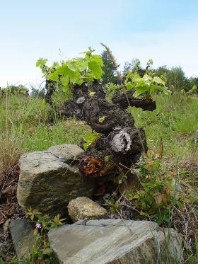 les vins du Rousillon