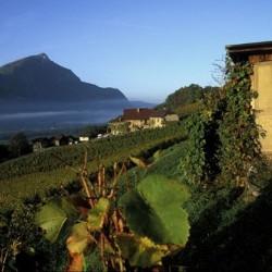 vins naturels de Savoie