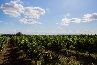 les vins du Sud-Ouest